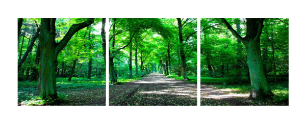 A Path Through The Trees Triptych