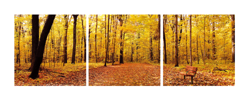 Autumn Trees Triptych