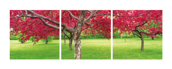 Cherry Blossoms Triptych