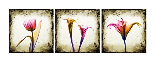 A New Look At Tulips Triptych