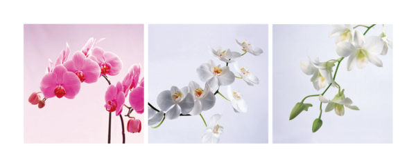 Assorted Orchids Triptych