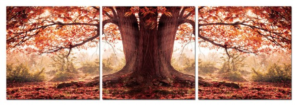Tree In the Fall Triptych