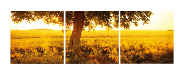 African Sunrise Triptych