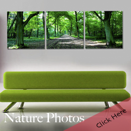 Nature Photography Photo Wall Art Triptych